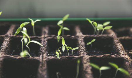 Merawat Kesehatan Jiwa dengan Berkebun