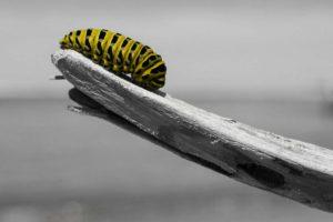 caterpillar-1209834_1280