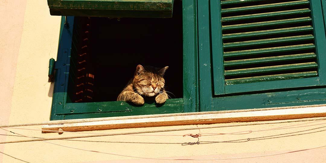 chris-barbalis-kucing-di-jendela